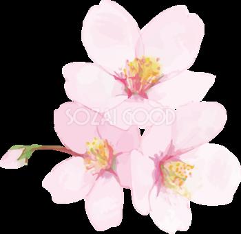 桜 花びら散るイラスト透過背景なし無料 フリー 素材good