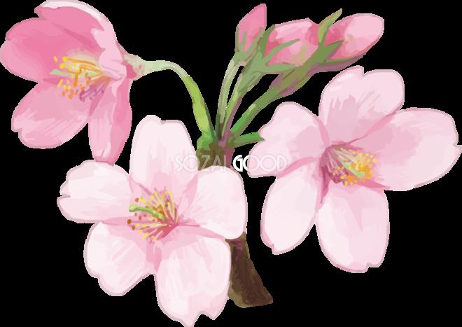 リアル綺麗な桜の枝イラスト 3輪の花飾り背景なし透過無料フリー83451