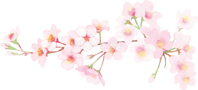 リアル綺麗な桜の枝イラスト たくさん咲く花飾り背景なし透過無料