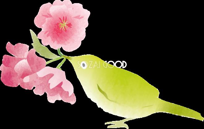 かわいいウグイスと桜の無料フリーイラスト83781 素材good