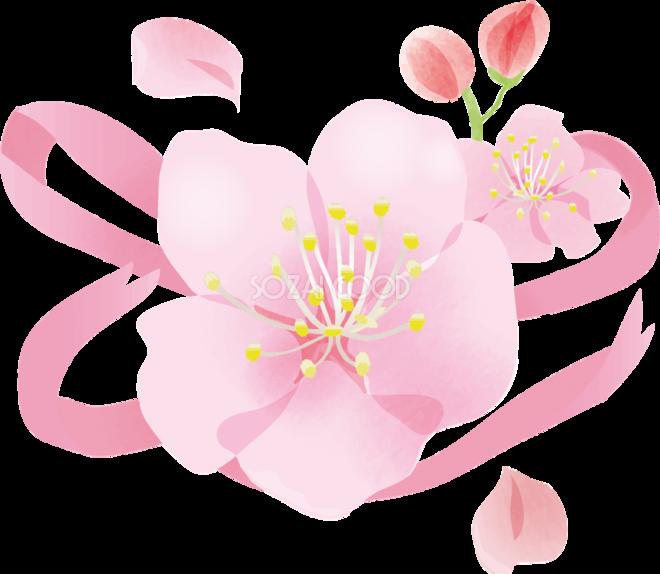 かわいい桜とリボン桜の無料フリーイラスト83784 素材good