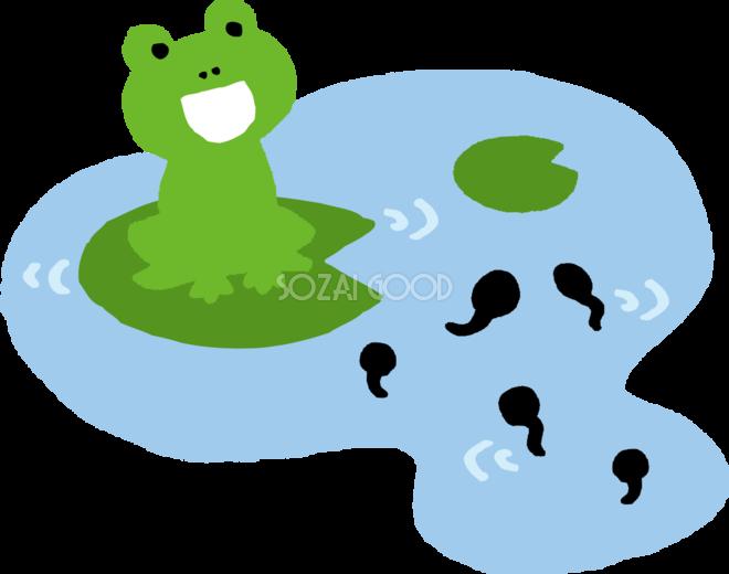 池とカエルとおたまじゃくしのかわいい梅雨の無料フリーイラスト83800