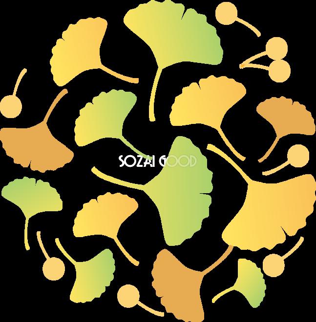 おしゃれに丸く集まったイチョウの葉とぎんなんイラスト無料フリー84487